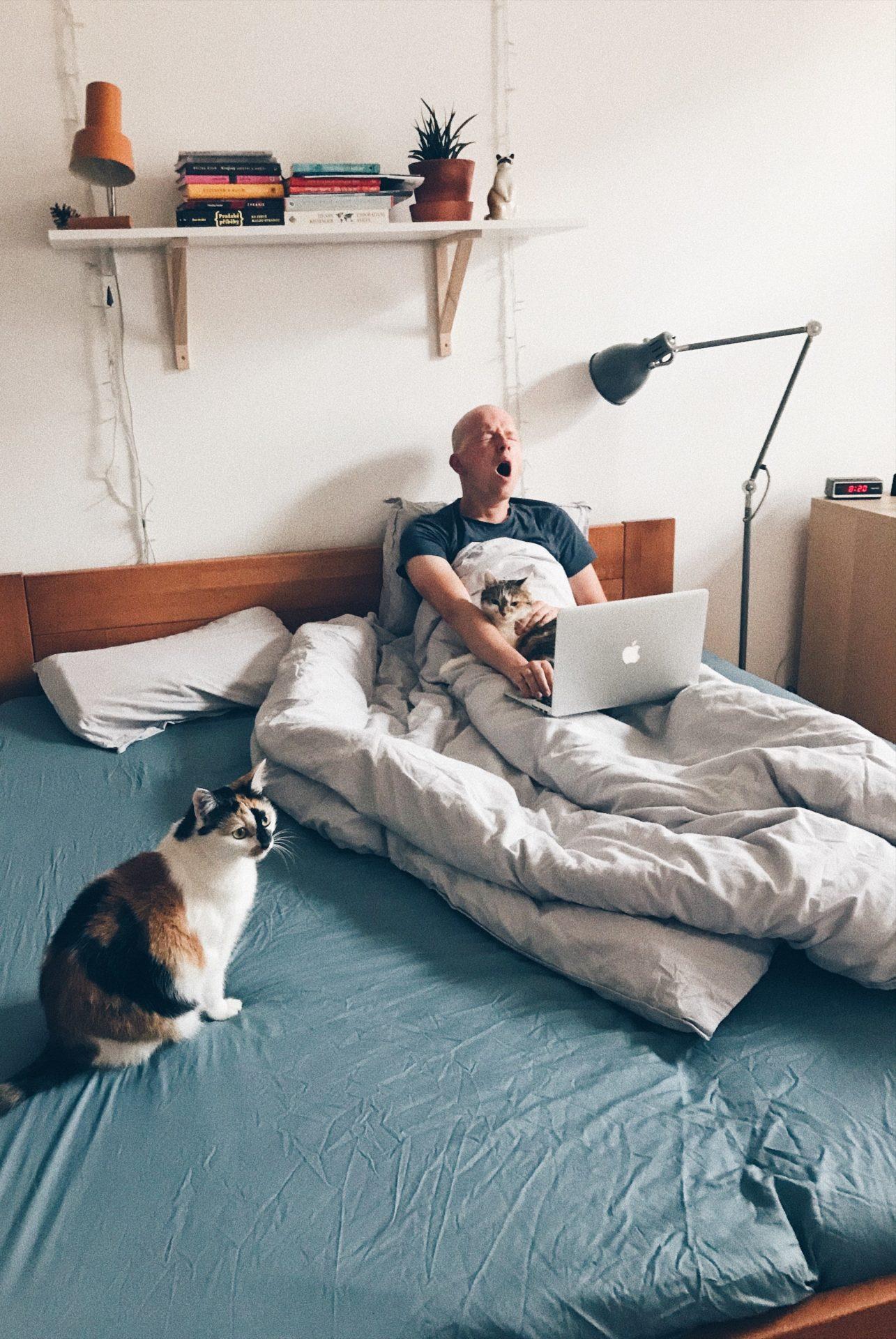 vstávání, skřivan, sova, ráno, únava, odpočinek, postel, kočky, ložnice