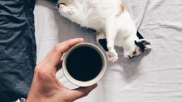 káva, kočka, postel, ráno, snídaně, vstávání, únava, odpočinek