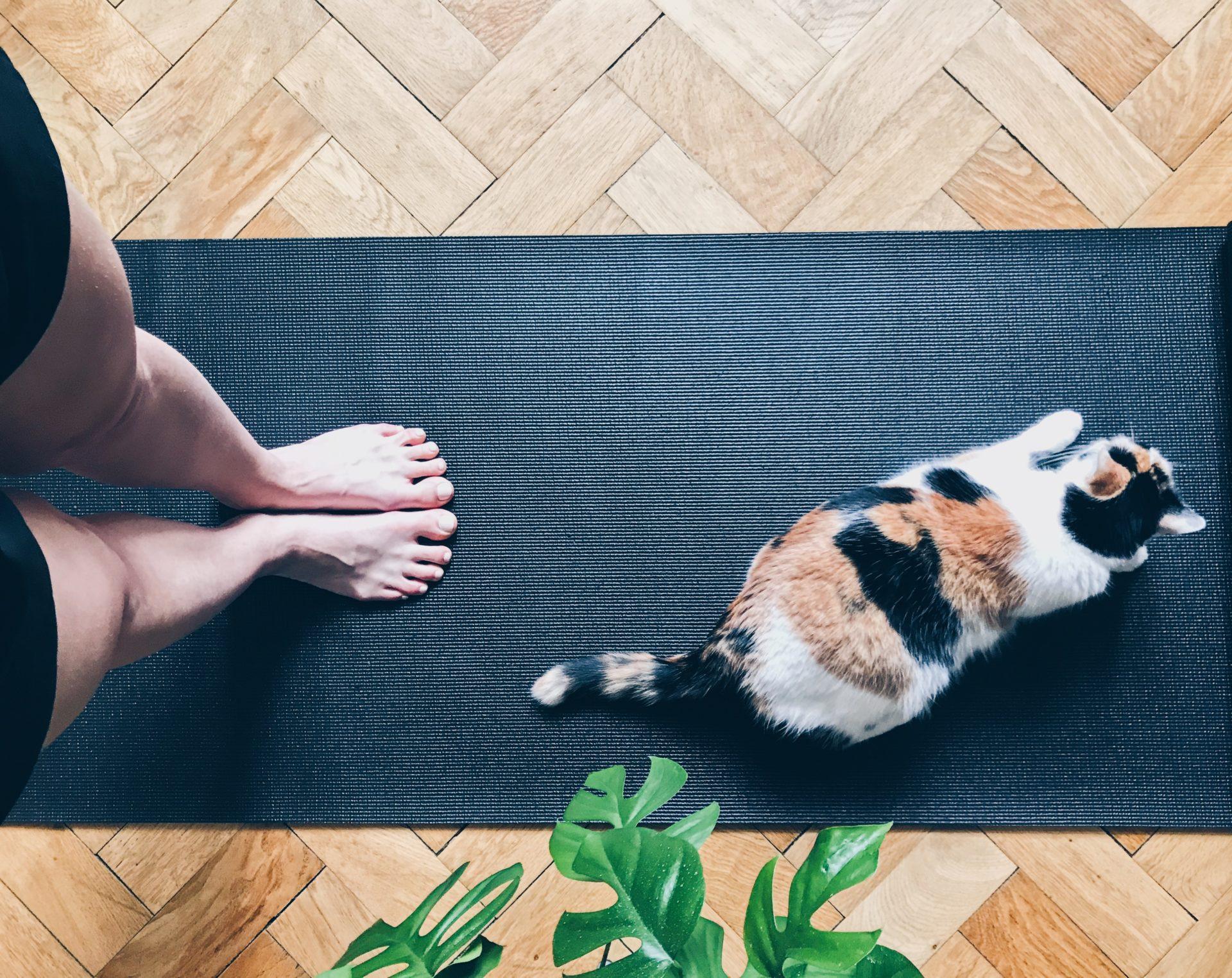 jóga, cvičení, kočka, pokojovky, monstera, ráno, vstávání, protahování